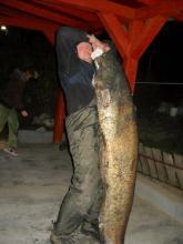 Harcsa 49,8 kg. /Héjas Jószef - 2011/